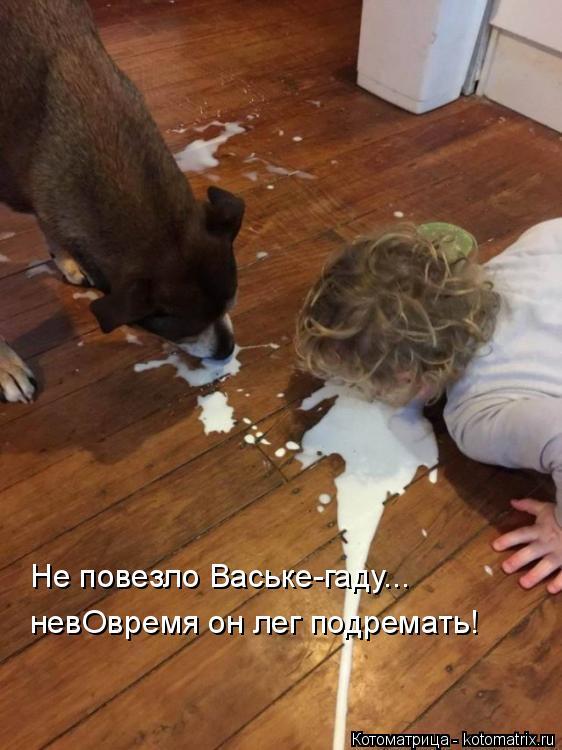 Котоматрица: Не повезло Ваське-гаду... невОвремя он лег подремать!