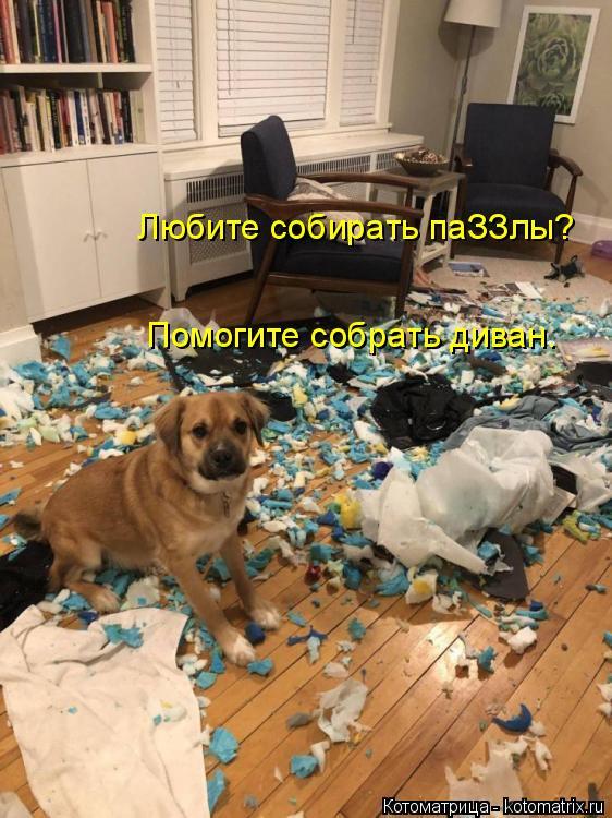 Котоматрица: Любите собирать паЗЗлы? Помогите собрать диван.