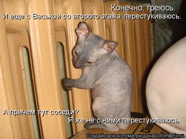 Котоматрица: Конечно, греюсь. И еще с Васькой со второго этажа перестукиваюсь. А причем тут соседи? Я же не с ними перестукиваюсь.