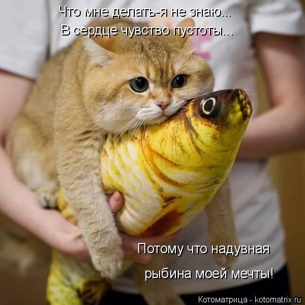 Котоматрица: Что мне делать-я не знаю... В сердце чувство пустоты... Потому что надувная рыбина моей мечты!
