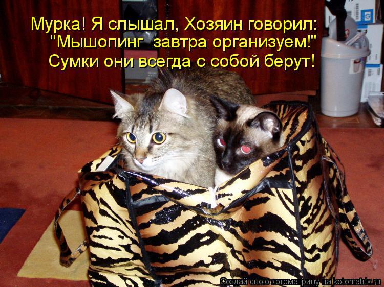 """Котоматрица: Мурка! Я слышал, Хозяин говорил: """"Мышопинг  завтра организуем!"""" Сумки они всегда с собой берут!"""