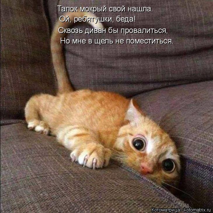 Котоматрица: Тапок мокрый свой нашла. Ой, ребятушки, беда! Сквозь диван бы провалиться, Но мне в щель не поместиться.