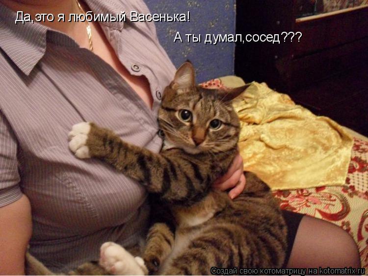 Котоматрица: Да,это я любимый Васенька! А ты думал,сосед???