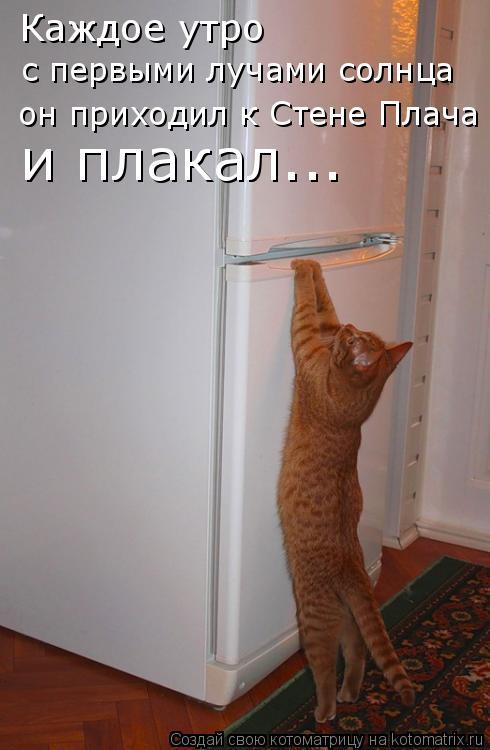 Котоматрица: Каждое утро  с первыми лучами солнца он приходил к Стене Плача и плакал...