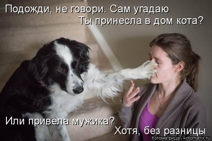Котоматрица: Подожди, не говори. Сам угадаю Ты принесла в дом кота? Или привела мужика? Хотя, без разницы