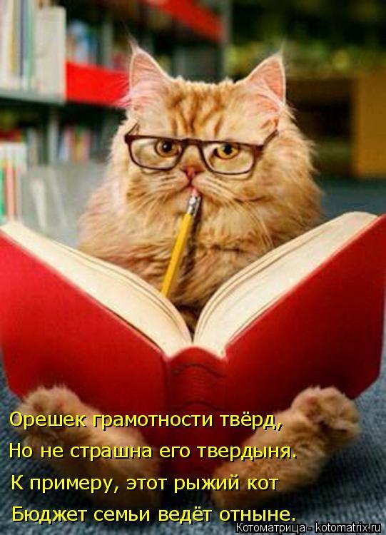 Котоматрица: К примеру, этот рыжий кот Но не страшна его твердыня. Орешек грамотности твёрд,  Бюджет семьи ведёт отныне.