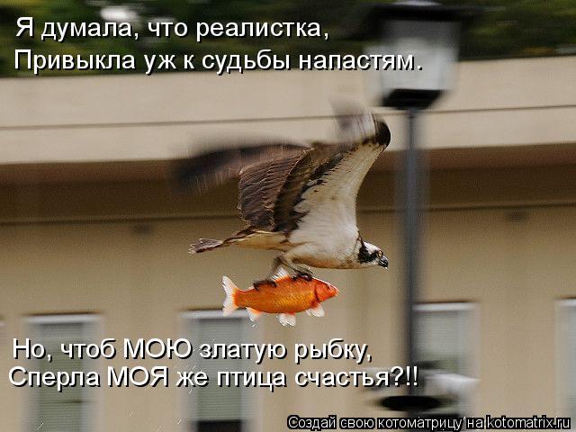 Котоматрица: Я думала, что реалистка, Привыкла уж к судьбы напастям. Но, чтоб МОЮ златую рыбку, Сперла МОЯ же птица счастья?!!
