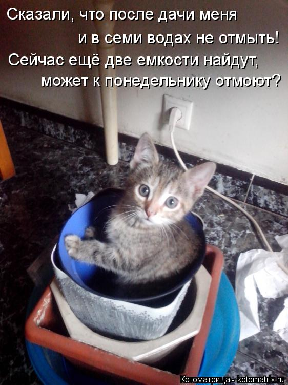 Котоматрица: Сказали, что после дачи меня  и в семи водах не отмыть! Сейчас ещё две емкости найдут, может к понедельнику отмоют?