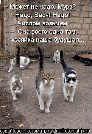 Котоматрица: - Может не надо, Мурз? - Надо, Вася! Надо! Числом возьмем. Она всего одна там, хозяйка наша будущая...