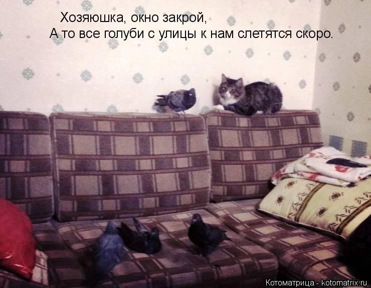 Котоматрица: Хозяюшка, окно закрой, А то все голуби с улицы к нам слетятся скоро.