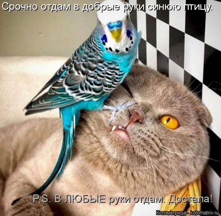 Котоматрица: Срочно отдам в добрые руки синюю птицу. P.S. В ЛЮБЫЕ руки отдам. Достала!