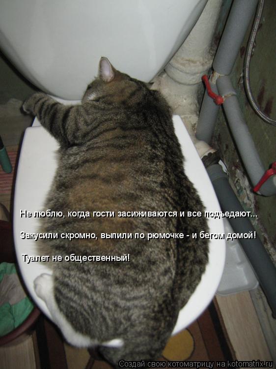 Котоматрица: Закусили скромно, выпили по рюмочке - и бегом домой! Туалет не общественный! Не люблю, когда гости засиживаются и все подъедают...
