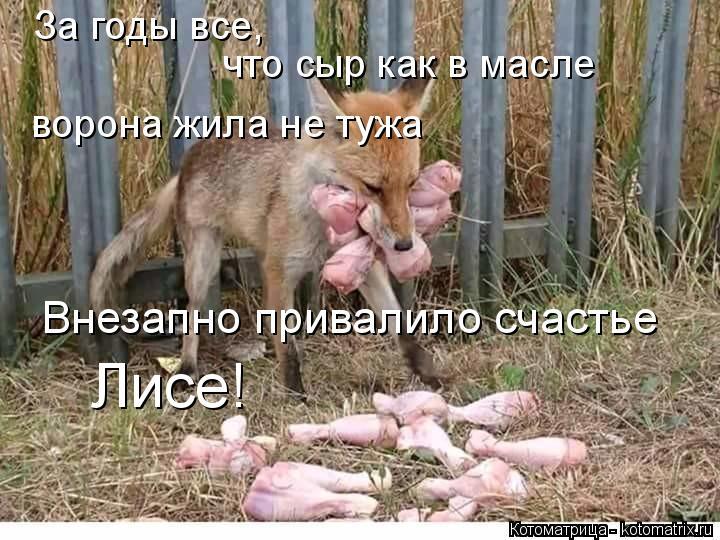 Котоматрица: За годы все, что сыр как в масле ворона жила не тужа Внезапно привалило счастье Лисе!