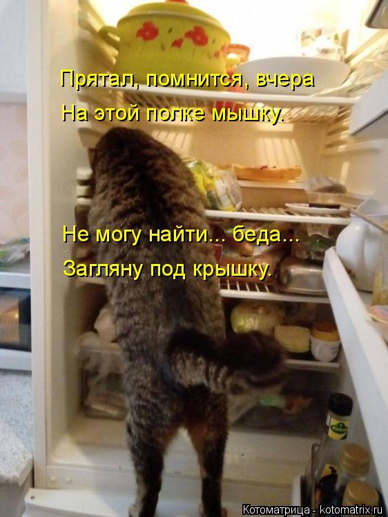 Котоматрица: Прятал, помнится, вчера На этой полке мышку. Не могу найти... беда... Загляну под крышку.