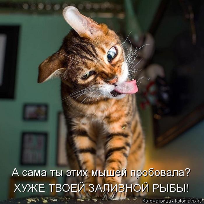 Котоматрица: А сама ты этих мышей пробовала? ХУЖЕ ТВОЕЙ ЗАЛИВНОЙ РЫБЫ!