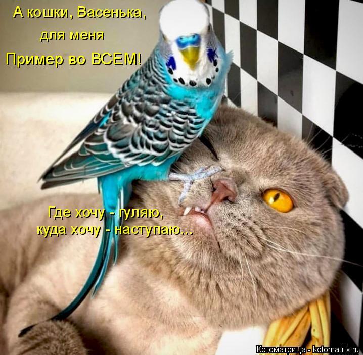Котоматрица: Пример во ВСЕМ! А кошки, Васенька,  для меня  Где хочу - гуляю,  куда хочу - наступаю...