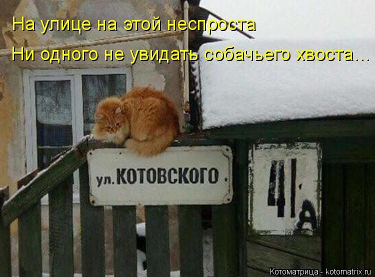 Котоматрица: На улице на этой неспроста Ни одного не увидать собачьего хвоста…