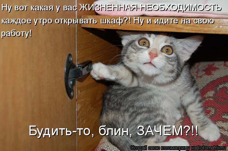 Котоматрица: Ну вот какая у вас ЖИЗНЕННАЯ НЕОБХОДИМОСТЬ каждое утро открывать шкаф?! Ну и идите на свою работу! Будить-то, блин, ЗАЧЕМ?!!