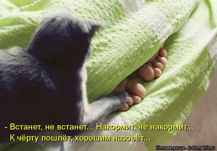 Котоматрица: - Встанет, не встанет... Накормит, не накормит... К чёрту пошлёт, хорошим назовёт...