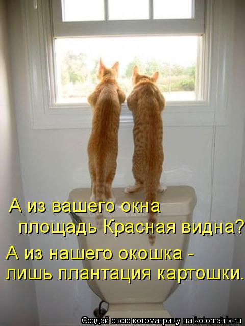 Котоматрица: А из вашего окна площадь Красная видна? А из нашего окошка -  лишь плантация картошки...