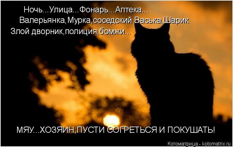 Котоматрица: Ночь...Улица...Фонарь...Аптека... Валерьянка,Мурка,соседский Васька,Шарик Злой дворник,полиция,бомжи... МЯУ...ХОЗЯИН,ПУСТИ СОГРЕТЬСЯ И ПОКУШАТЬ!