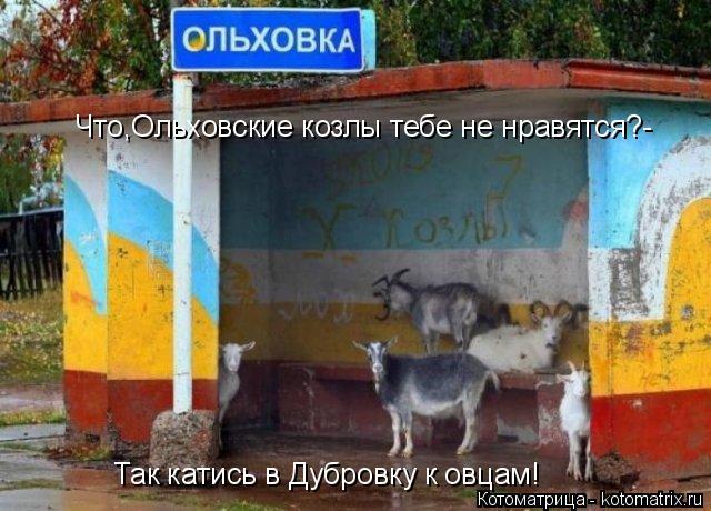 Котоматрица: Что,Ольховские козлы тебе не нравятся?- Так катись в Дубровку к овцам!