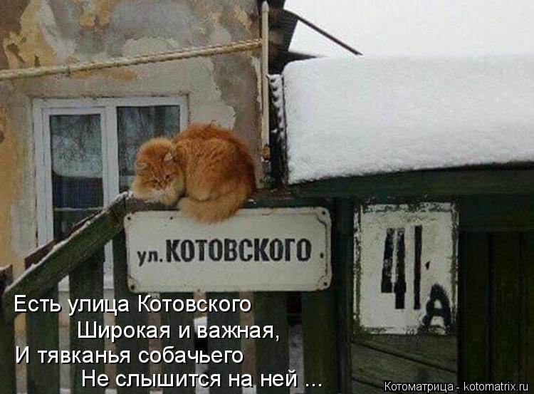 Котоматрица: Есть улица Котовского Широкая и важная, И тявканья собачьего Не слышится на ней ...