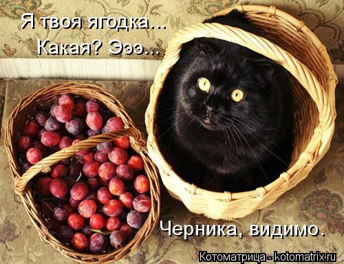 Котоматрица: Я твоя ягодка... Какая? Эээ... Черника, видимо.