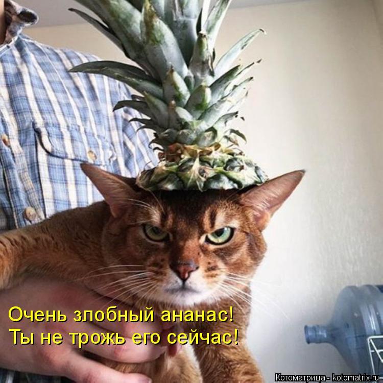 Котоматрица: Очень злобный ананас! Ты не трожь его сейчас!