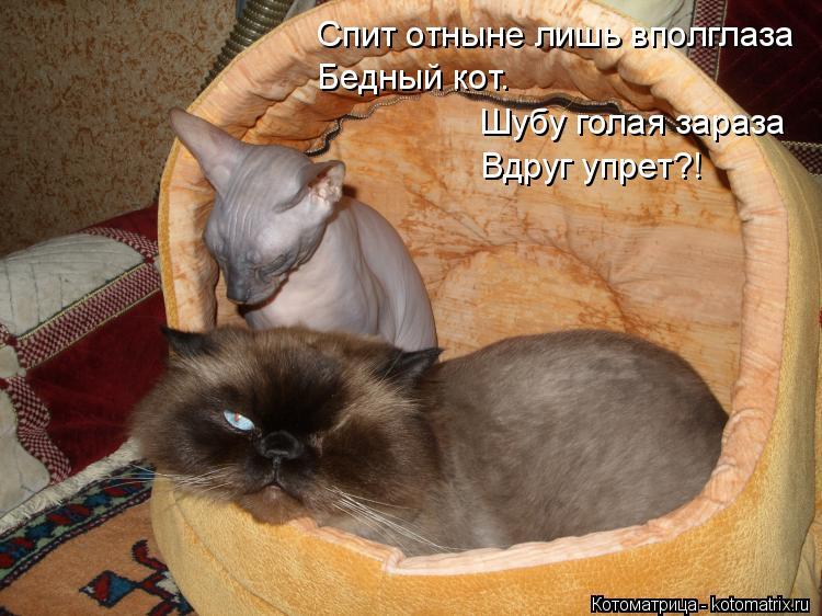 Котоматрица: Спит отныне лишь вполглаза Бедный кот. Шубу голая зараза Вдруг упрет?!