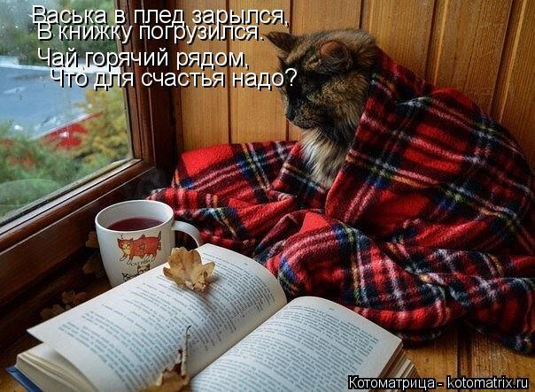 Котоматрица: Васька в плед зарылся, В книжку погрузился. Чай горячий рядом, Что для счастья надо?