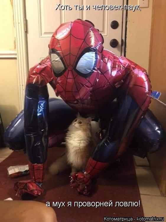 Котоматрица: Хоть ты и человек-паук, а мух я проворней ловлю!
