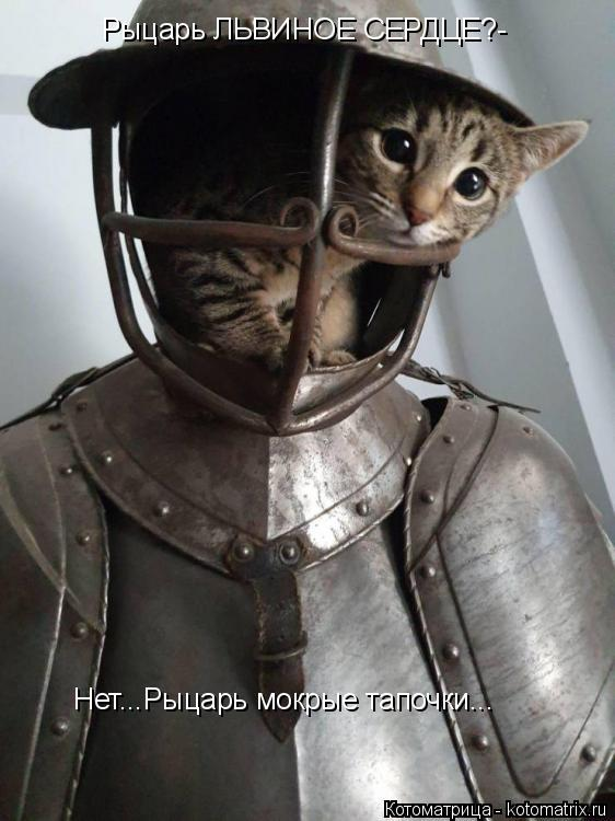 Котоматрица: Рыцарь ЛЬВИНОЕ СЕРДЦЕ?- Нет...Рыцарь мокрые тапочки...