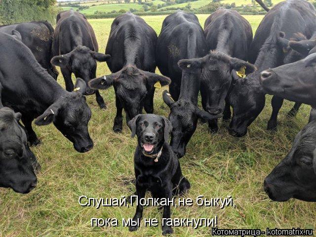 Котоматрица: Слушай,Полкан,не быкуй, пока мы не гавкнули!