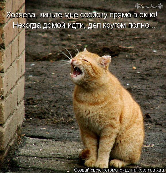 Котоматрица: Хозяева, киньте мне сосиску прямо в окно! Некогда домой идти, дел кругом полно...