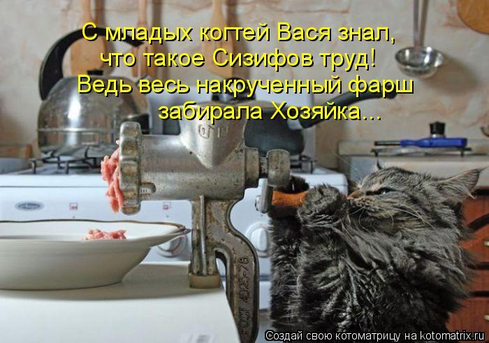 Котоматрица: С младых когтей Вася знал,  что такое Сизифов труд!  Ведь весь накрученный фарш забирала Хозяйка...