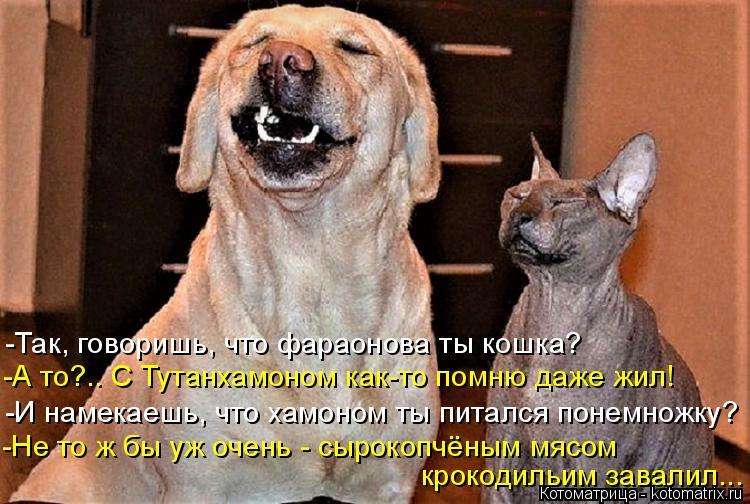 Котоматрица: -Так, говоришь, что фараонова ты кошка? -И намекаешь, что хамоном ты питался понемножку? -Не то ж бы уж очень - сырокопчёным мясом крокодильим ?