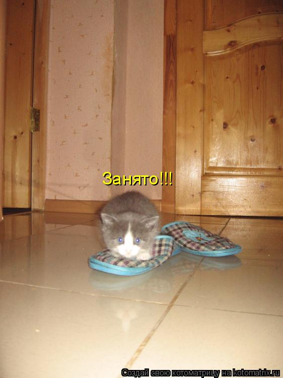 Котоматрица: Занято!!!