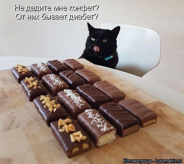 Котоматрица: Не дадите мне конфет? От них бывает диабет?