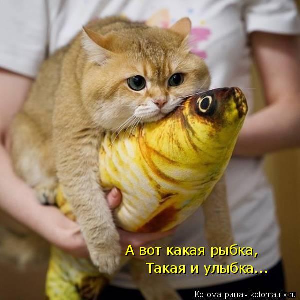 Котоматрица: А вот какая рыбка, Такая и улыбка...