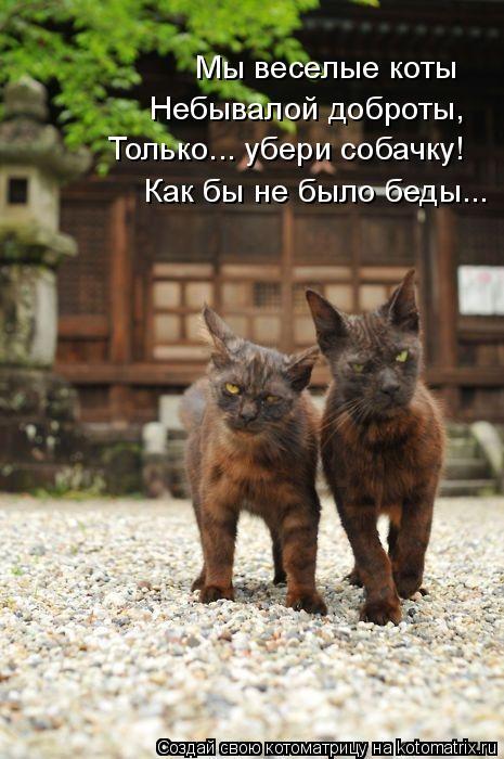 Котоматрица: Мы веселые коты Небывалой доброты, Только... убери собачку! Как бы не было беды...