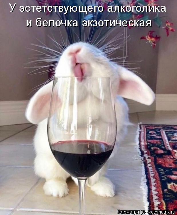 Котоматрица: У эстетствующего алкоголика  и белочка экзотическая