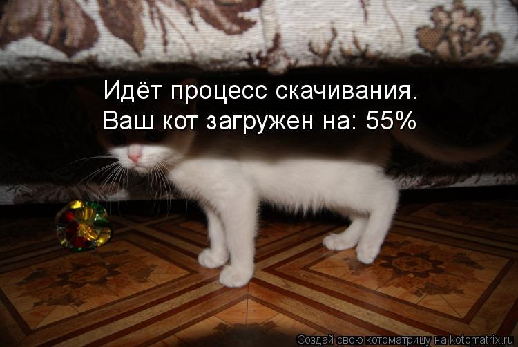 Котоматрица: Идёт процесс скачивания. Ваш кот загружен на: 55%