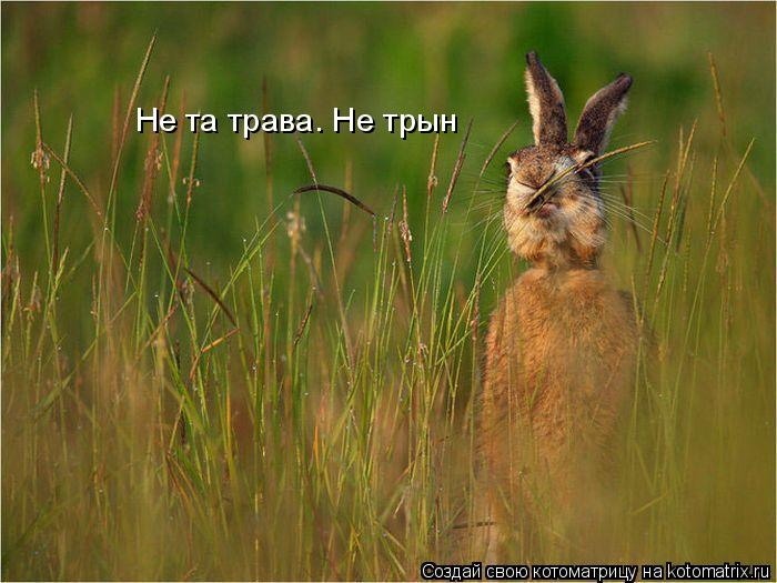 Котоматрица: Не та трава. Не трын