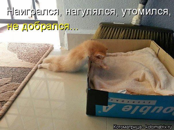 Котоматрица: Наигрался, нагулялся, утомился, не добрался...