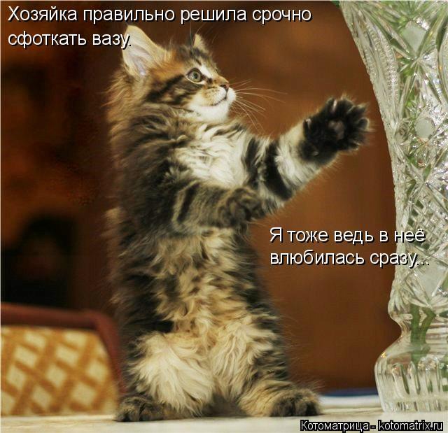 Котоматрица: Хозяйка правильно решила срочно  сфоткать вазу. Я тоже ведь в неё влюбилась сразу...
