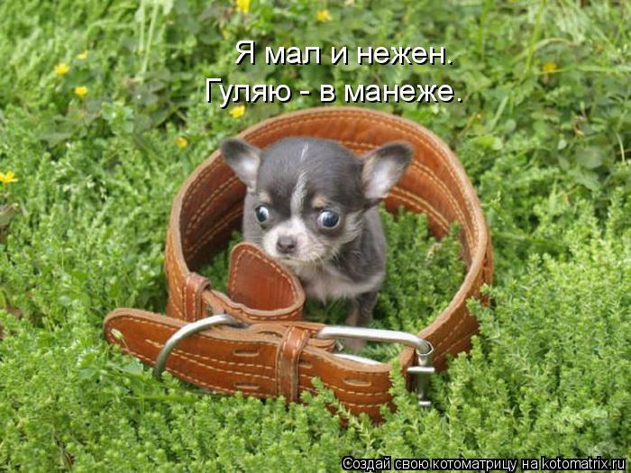 Котоматрица: Я мал и нежен. Гуляю - в манеже.