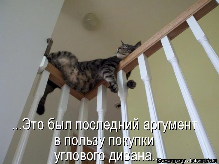 Котоматрица: ...Это был последний аргумент в пользу покупки углового дивана...