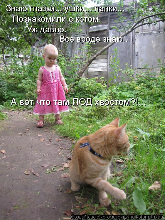 Котоматрица: Знаю глазки... ушки... лапки... Познакомили с котом  Уж давно.  Все вроде знаю... А вот что там ПОД хвостом?!...