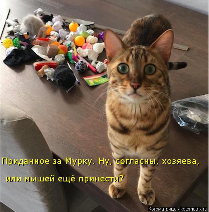Котоматрица: Приданное за Мурку. Ну, согласны, хозяева,  или мышей ещё принести?
